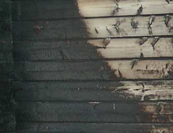 Always check your local authority to see what, if any, log cabin fire treatment you need