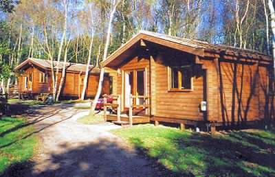 A log cabin holiday in the forest